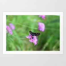 birds, bees and butterflys Art Print