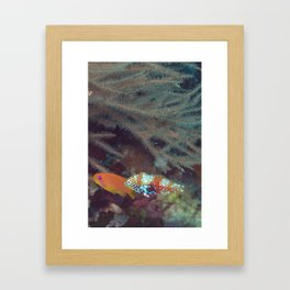 Gossiping old lady fish Framed Art Print