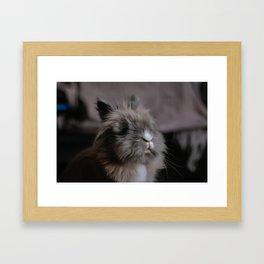 Little Bunny - Pancake Framed Art Print