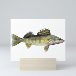 Walleye Mini Art Print