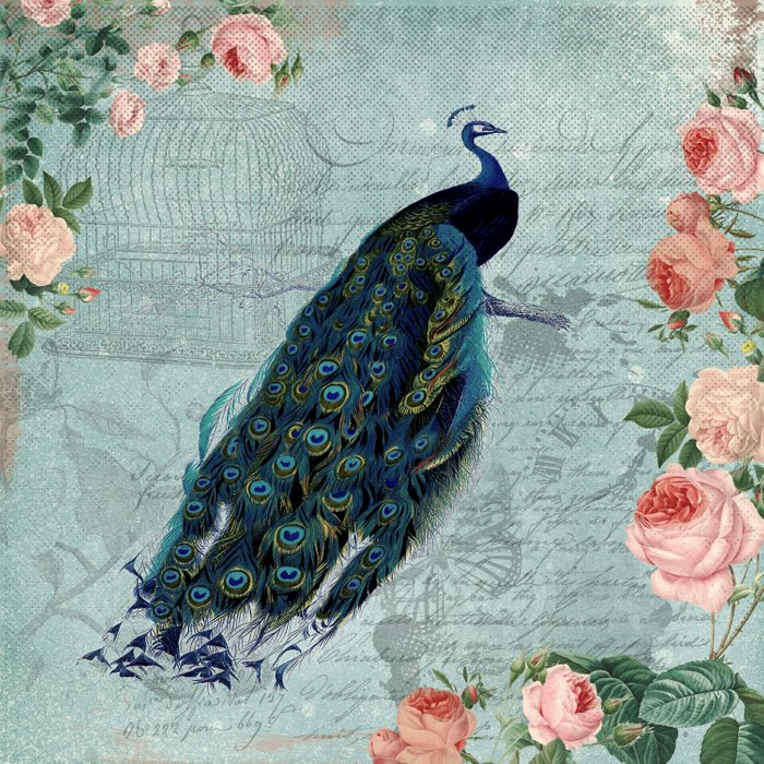 Vintage Victorian Peacock Bird and Roses Illustration Comforters
