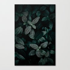 Dark Leaves 3 Canvas Print