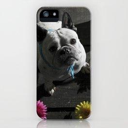 Os Patudos 3 - French Bulldog iPhone Case