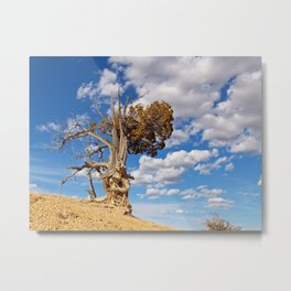 Bristlecone Pine at Bryce Canyon Metal Print