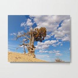 Bristlecone Pine at Bryce Canyon Metal Print