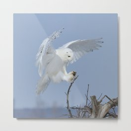 Landing with royal precision Metal Print