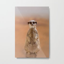 A cute Meerkat, standing on two legs, watches his area. Metal Print