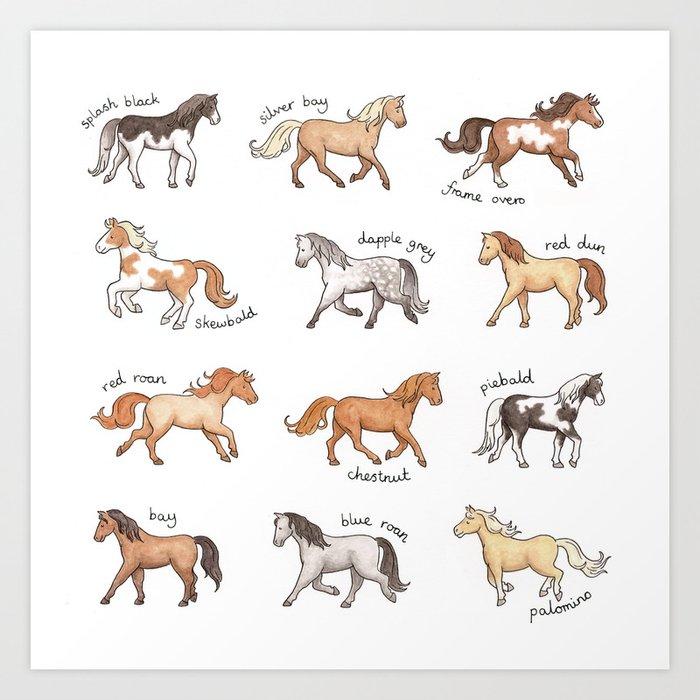 Horses - different colours and markings illustration Kunstdrucke