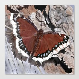 Cloak of Mourning Butterfly Canvas Print