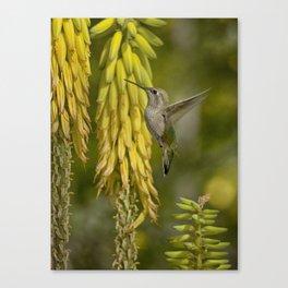 A Taste of Spring Canvas Print