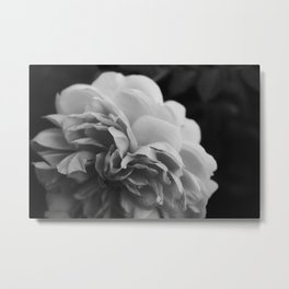Wildeve Rose No. 2 - Black & White Metal Print