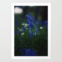 Beautiful Blue.  Art Print