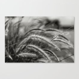 Breeze Canvas Print