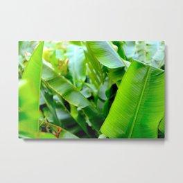 banana tree Metal Print