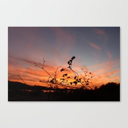 Flowers in the Sunset Canvas Print