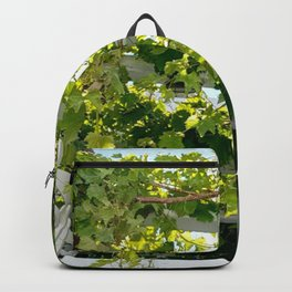 The Vid Backpack