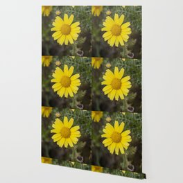 Daisy flower cu yellow Wallpaper
