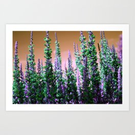 Mini Conifers Art Print