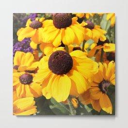 Bright yellow Black-Eyed Susans Metal Print