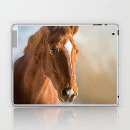 Brown Horse Winter Sky Laptop & iPad Skin