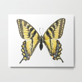 Eastern tiger swallowtail butterfly, papillon glauque Metal Print