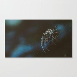 Spider Creeper Canvas Print