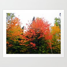 Forest Pallet of Colors Art Print