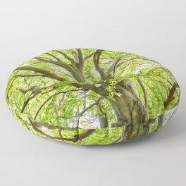 Beech Tree Floor Pillow