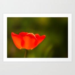 La tulipe orange Art Print
