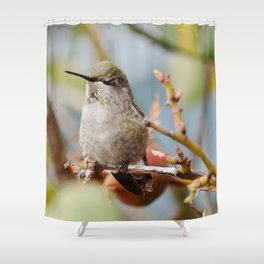 Sleepy little Hummingbird Shower Curtain