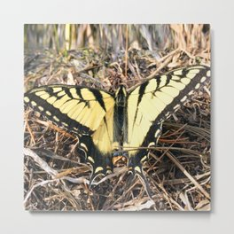 Watercolor Butterfly, Swallowtail Butterfly 01, Swallow Falls State Park, Maryland Metal Print