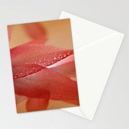 Cactus Blossom in Sunlight  Stationery Cards