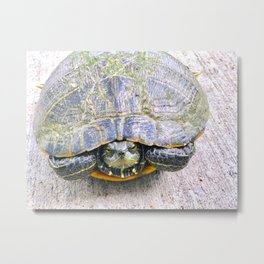 Mr. CC Turtle Metal Print