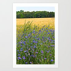 Field of Blue Art Print