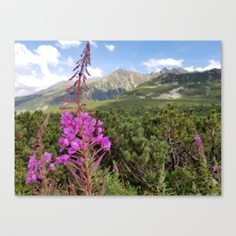 Carpathian Tatry Mountain and Flower Summer Landscape Photo Canvas Print