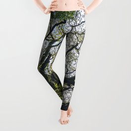 Centenary oak covered with moss and plants Leggings