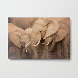 Herd of elephants in Addo Elephant National Park, South Africa Metal Print