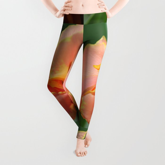 Dwarf Canna Lily named Corsica Leggings