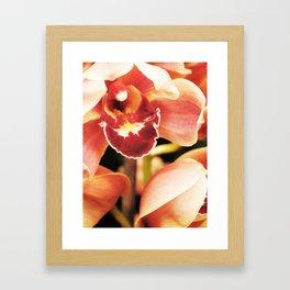 Flaming Orchid Framed Art Print