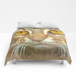 AMBER-EYED BEAUTY Comforters