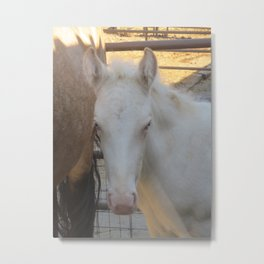 Perlino Rocky Mountain filly Metal Print