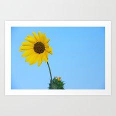 Sunflower Blue Sky Art Print