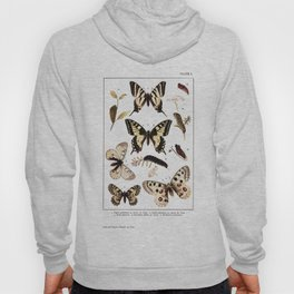 British and European Butterflies and Moths Antique Illustration Hoody