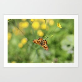 Small pearl-bordered fritillary and buttercups Art Print