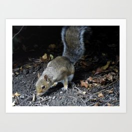 Squirrel Forage Art Print