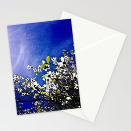 Pacific Dogwood Blossoms Stationery Cards