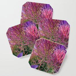 Sticks on Fire with Agave Coaster