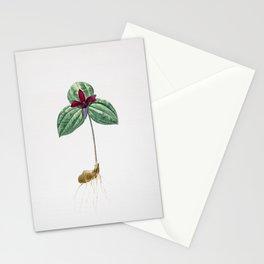Vintage Tri Flower Illustration Stationery Cards
