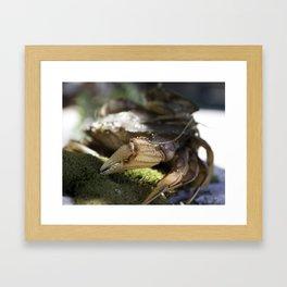Crabs  Framed Art Print