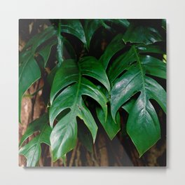 TROPICAL Metal Print